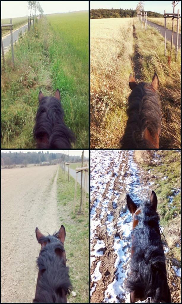 Čtyři roční období v sedle jednoho koně | Carrick Stables: parkurové